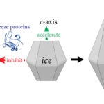Ran Drori ice crystals